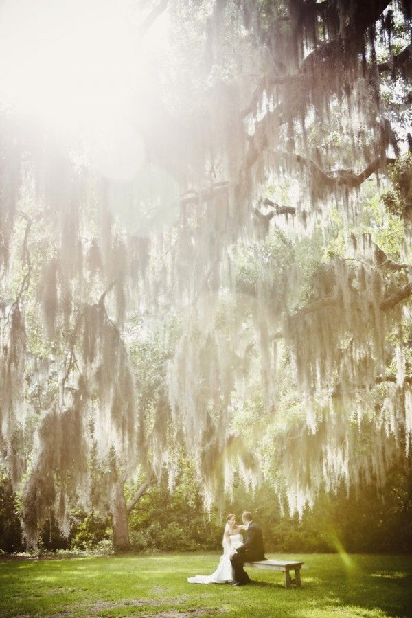 Spanish moss is so southern and so romantic. To get married under one of these amazing tress would be a dream!