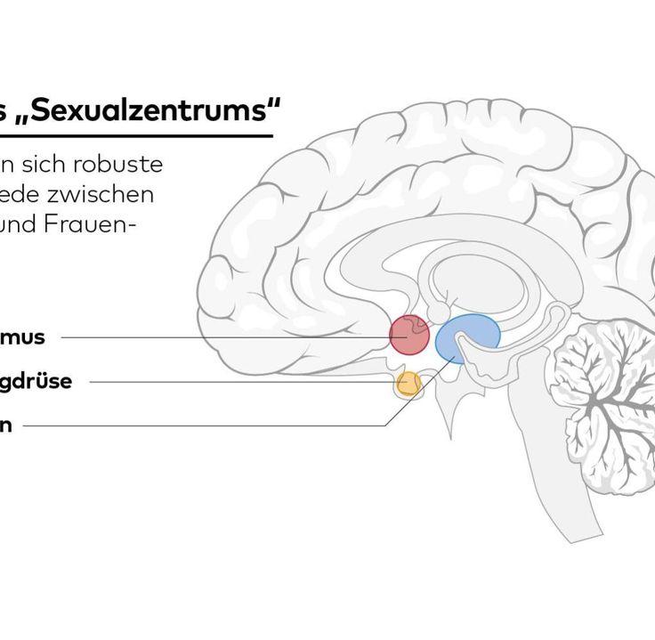 Der Teil des Gehirns, um den es geht, misst nur wenige Millimeter. Er sitzt tief im Gehirn, in einem evolutionär sehr alten Bereich, dem Zwischenhirn. Dessen Funktionen sind zum großen Teil so basal, so instinktiv, dass sie beim Menschen kaum komplexer sind als bei anderen Säugetieren. Und dort liegt der sogenannte Nucleus präopticus medialis: ein kleiner Nervenzellkern, also eine Ansammlung von Nervenzellen, die zusammen eine bestimmte Aufgabe erfüllen.