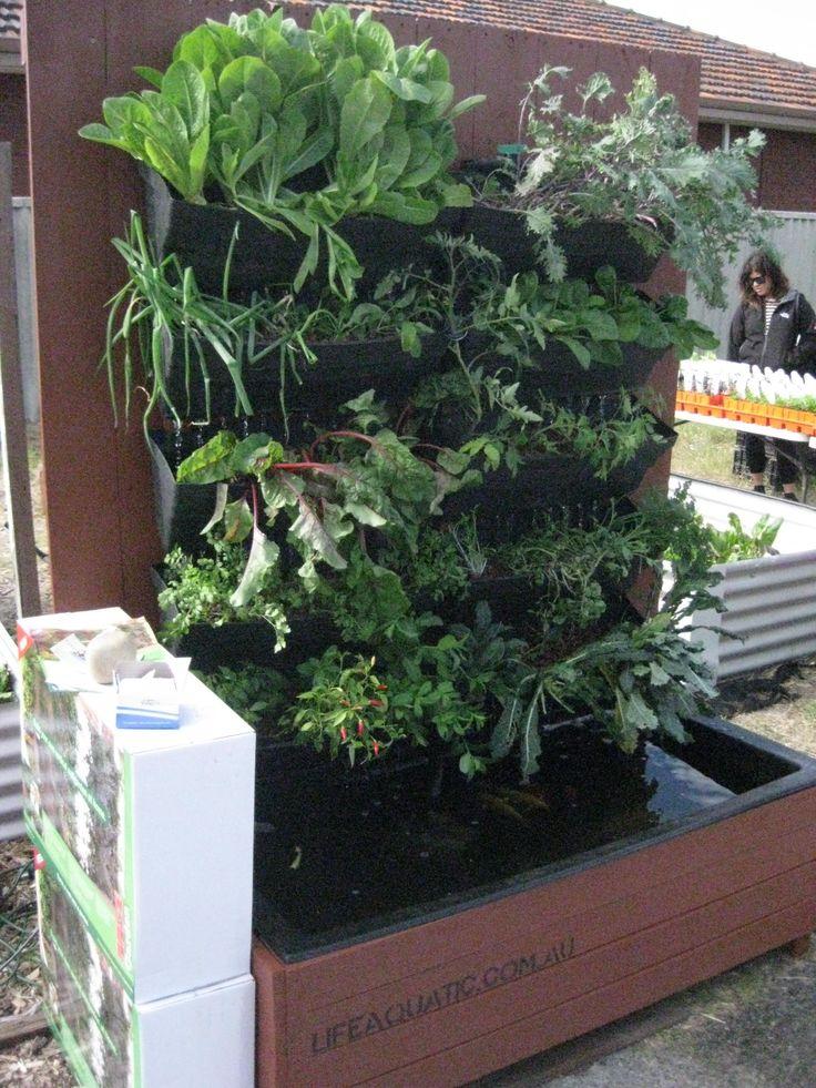 17 best images about hyrdoponics aquaponics on pinterest for Fish pond hydroponics