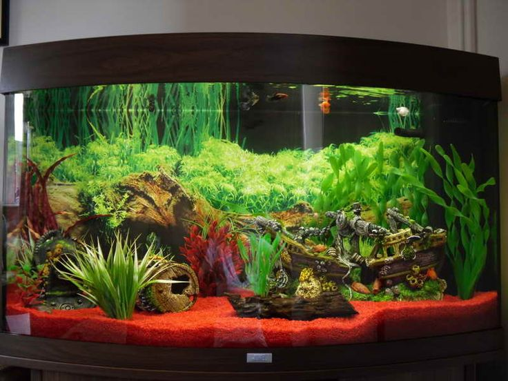 Fish tank setup just keep swimming pinterest for Aquarium decoration ideas