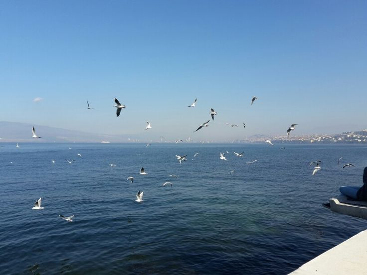 İzmir'imin martıları .
