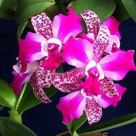 Se escreva no link azul no meu perfil @como_cultivar_orquideas Veja tudo que você vai encontrar no manual Para cuidar de Orquídeas ☑Cuidados com Orquídeas ☑Cuidado de longo prazo ☑Luz para a orquídeas ☑Luz artificial para orquídeas ☑Tipo de luz artificial ☑Temperatura ☑Movimento aéreo ☑Dividindo as orquídeas 56 ☑Fertilização ☑Requisitos de água ☑Doenças comuns ☑Cuidar da orquídeas #lindas #exuberante #maravilhosas #