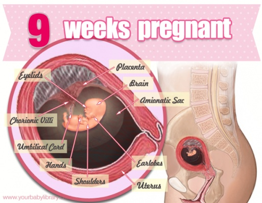 Symptoms of pregnancy: What happens first - Mayo Clinic