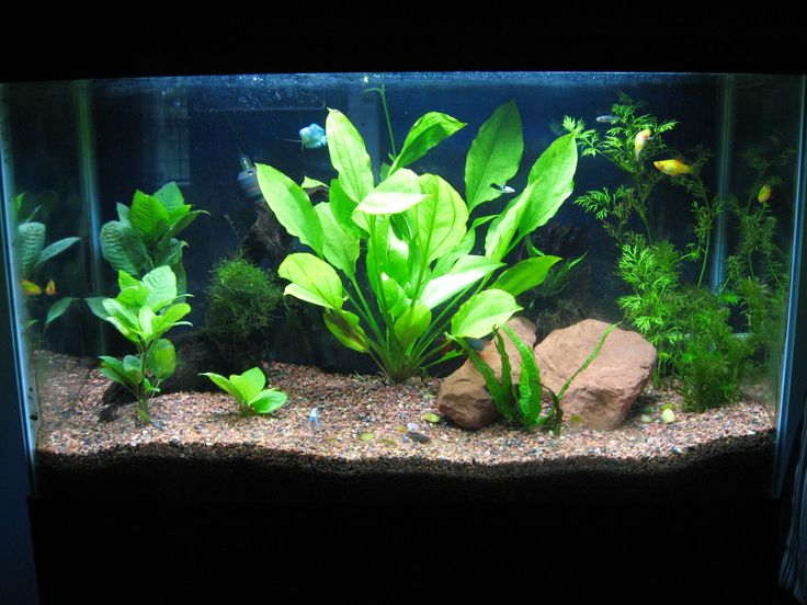 ... planted aquariums planted tank tanks forward an old planted tank pin 2