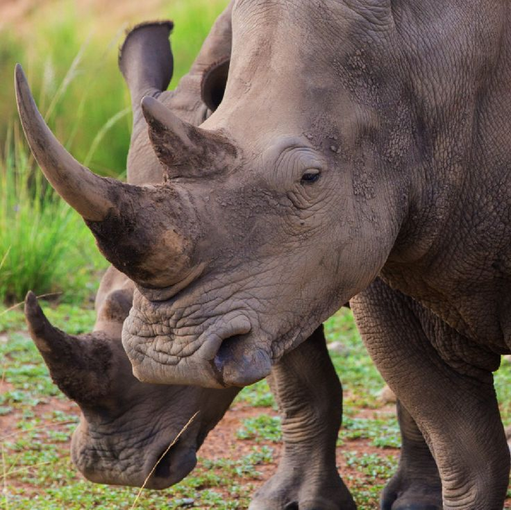 On arrival at Karkloof Safari Spa you could come across a beautiful White Rhino – and other wildlife – before you even reach reception.