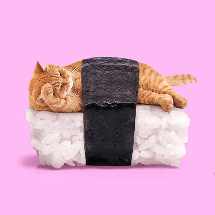 SUSHI CAT - Paul Fuentes Design