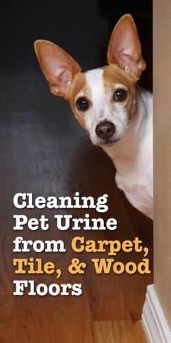 Cleaning Pet Urine from Carpet, Tile, and Wood Floors
