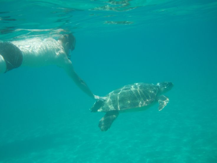 Snorkeling with the ses turtles