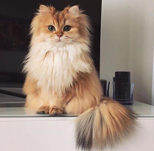 Zu den beliebtesten Tags für dieses Bild zählen: cat, animal, kitten und pet