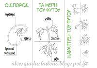 Ιδέες για δασκάλους: Φακές, φασόλια και το φυτολόγιο της τάξης!