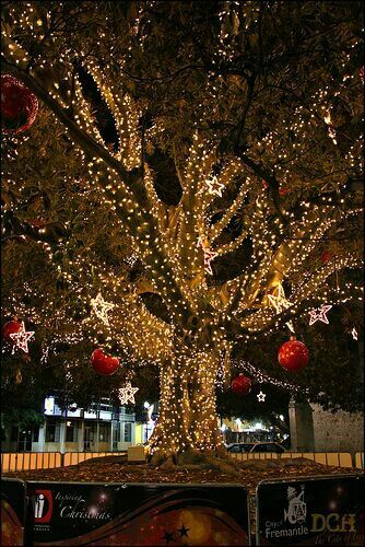 Christmas lights and lanterns completely covering a beautiful old tree.