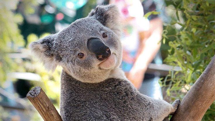 ► 10 animales australianos que no te matarán, recopilados por un australiano http://es.gizmodo.com/10-animales-australianos-que-no-te-mataran-recopilados-1790395199