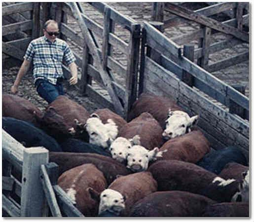 Is there any law that prevents animal slaughter?