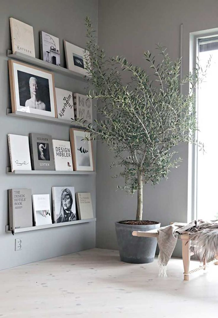 Een esthetische toevoeging aan je interieur: de olijfboom als kamerplant - Roomed