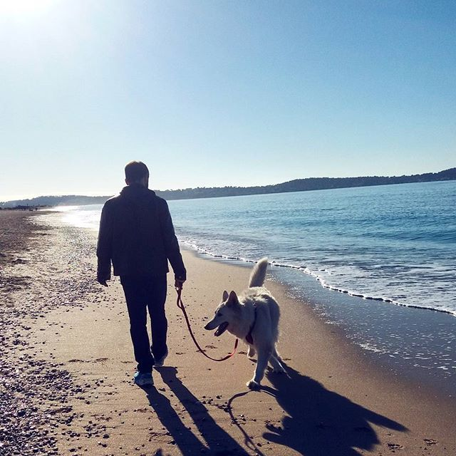 Inaugurer le premier jour des vacances avec une belle balade en bord de mer et croiser Gérard Jugnot pédalant  tranquillou sur son vélo   #gerardjugnot #southfrance #frenchriviera #2k16 #christmas #photoodtheday #photoofthemoment #mylove #dog #instadog #bbs #wss #likeforike #followforfollow #family #sea #beach #waves #holliday #freetime #withlove #femmedemarin #militarywife #navywife