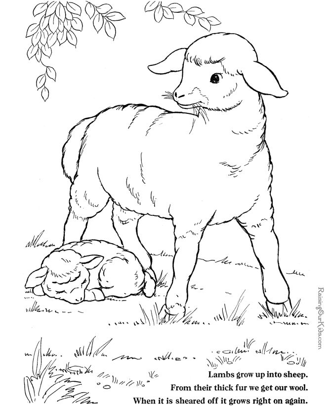 236 best Coloring Pages Life On The Farm images on Pinterest ...