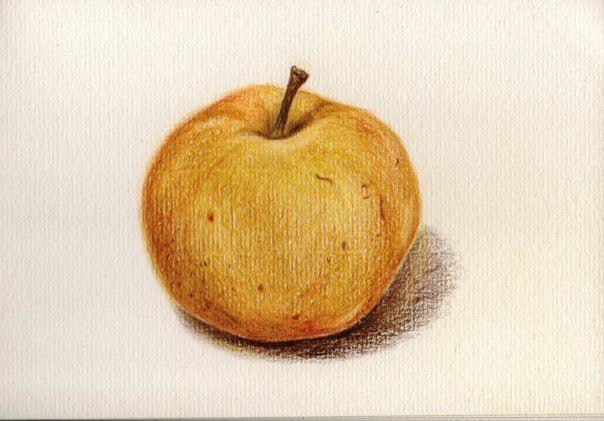 Sketch de pera asiática