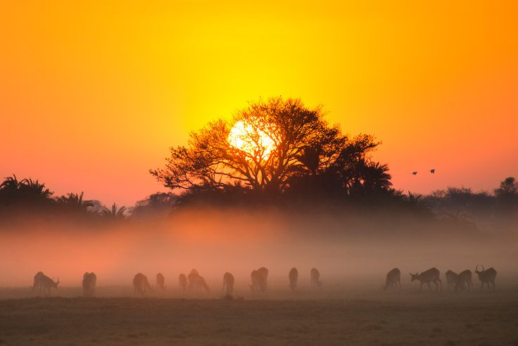 Spectacular sunsets are guaranteed at Mukambi! #busanga #mukambi