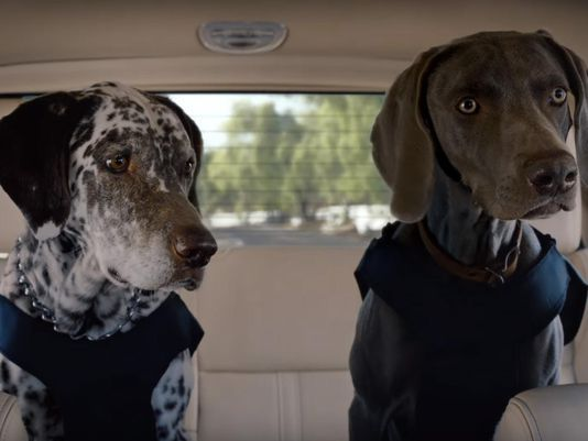 Lincoln Dogs Gsp Our Dog Rocky Pinterest Matthew Mcconaughey