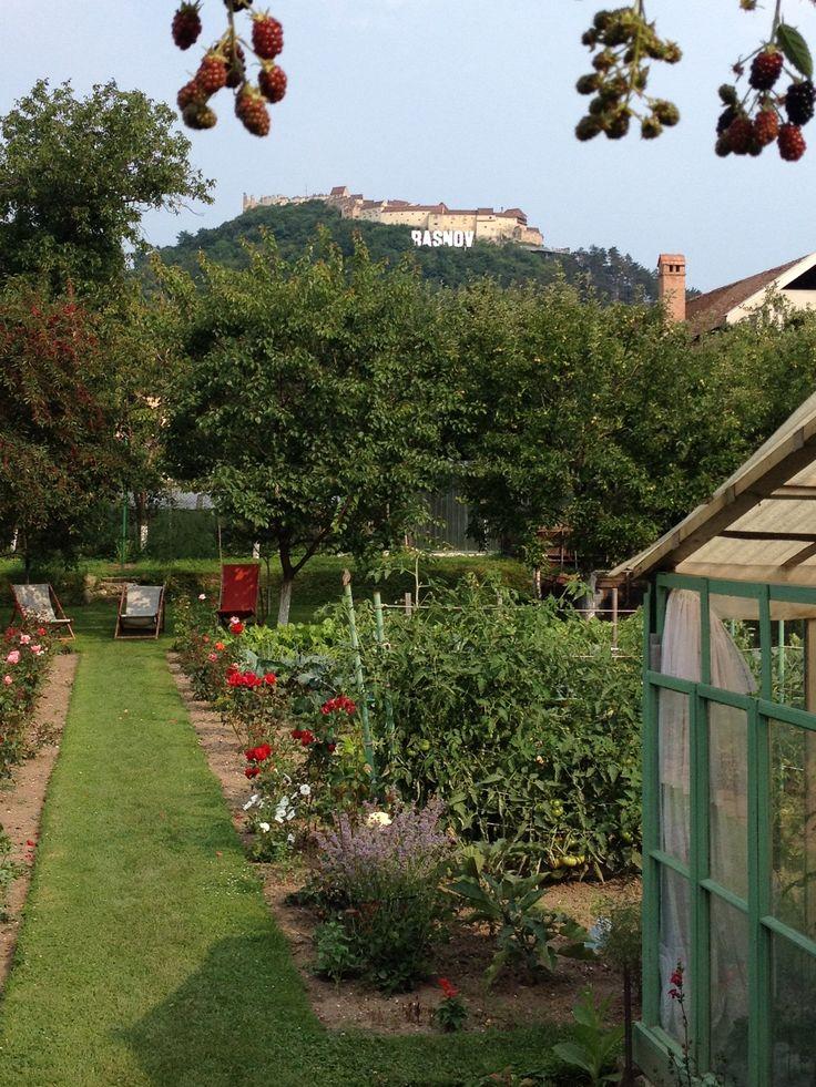 Taze's Garten