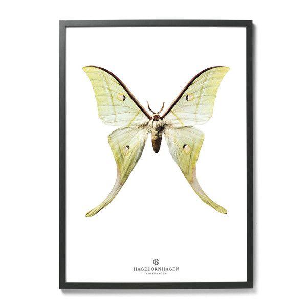Plakat Hagedornhagen- motyl   Designzoo