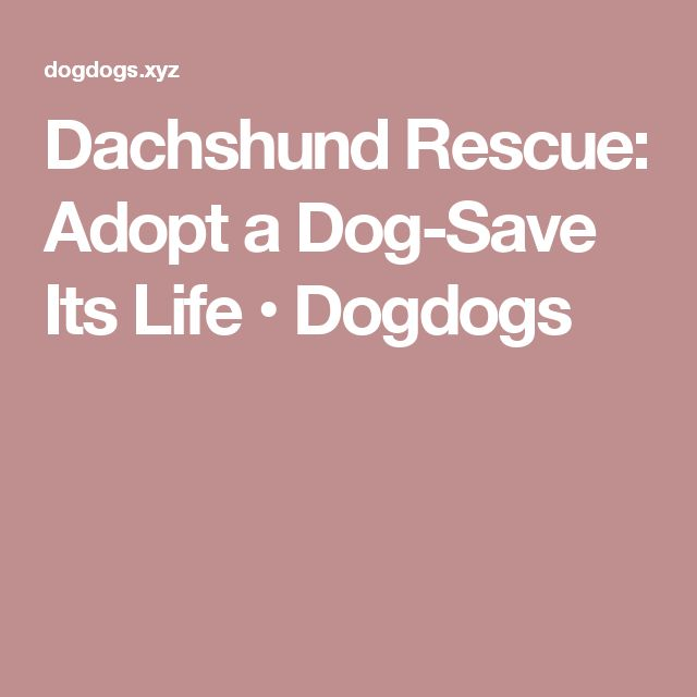 Dachshund Rescue: Adopt a Dog-Save Its Life • Dogdogs