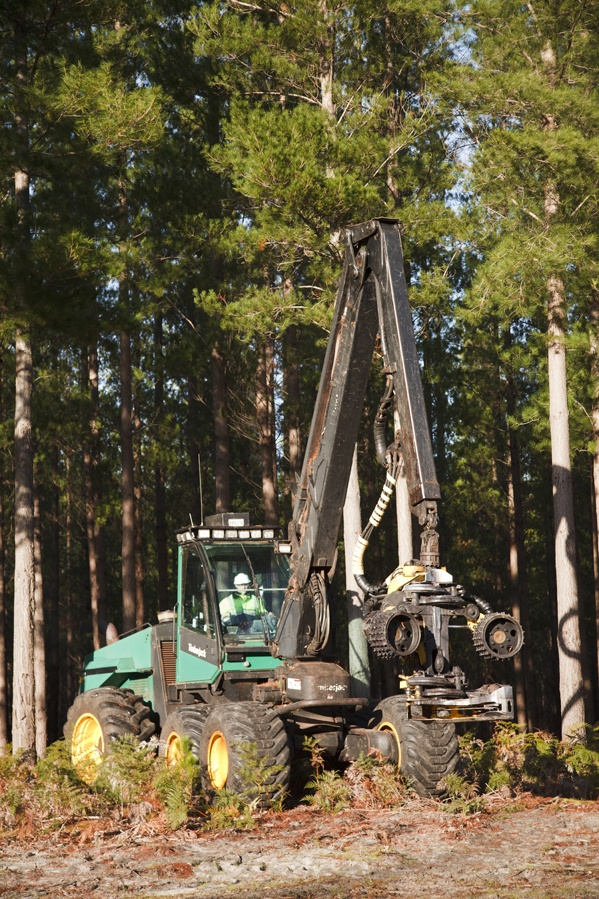 17 Best Images About Timberjacks And Sawmill Stuff Etc