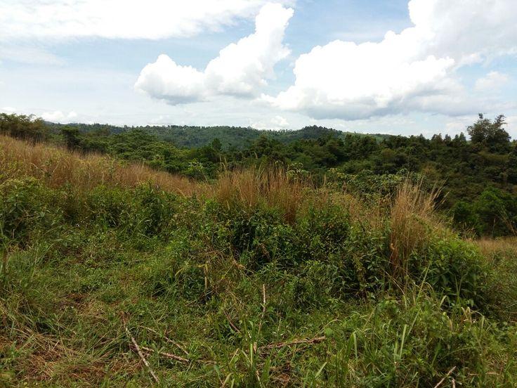 Dijual cepat tanah kebun 20 hektar di bogor. Info www.tanahkebun.com