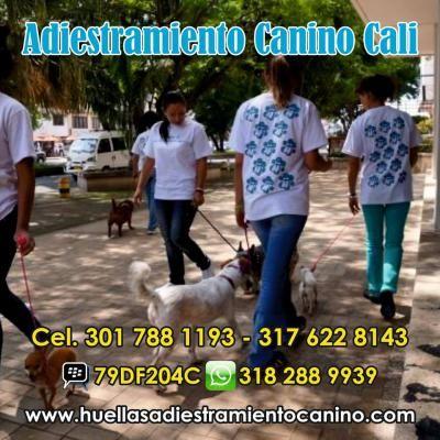 Adiestramiento Canino Cali y Palmira http://palmira.anunico.com.co/