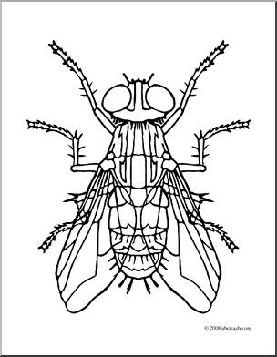 coloring pages animal classification lesson - photo#43