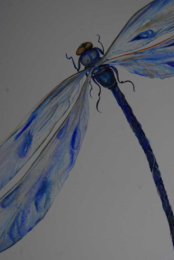 blue dragonfly for a book cover.