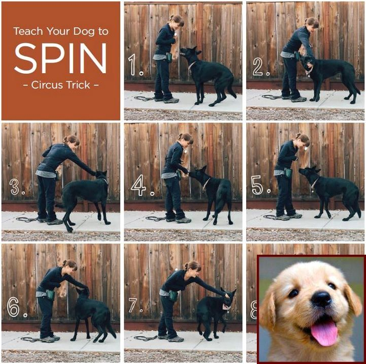 House Training A Puppy In Nyc And Clicker Training Dogs Sit Dog