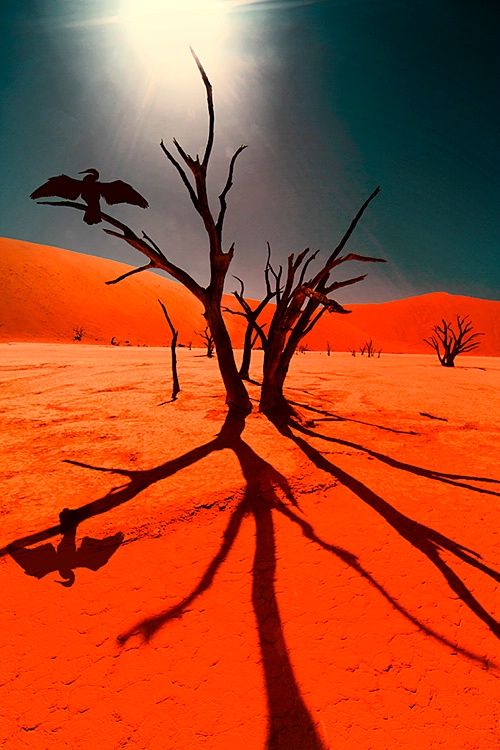 Africa | Deadvlei, Namib-Naukluft National Park, Namibia | ©Jim Zuckerman.