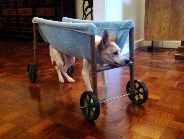 Aprenda a montar uma cadeira de rodas para cachorros tetraplégicos por 100 reais | Carolina Giovanelli - Bichos