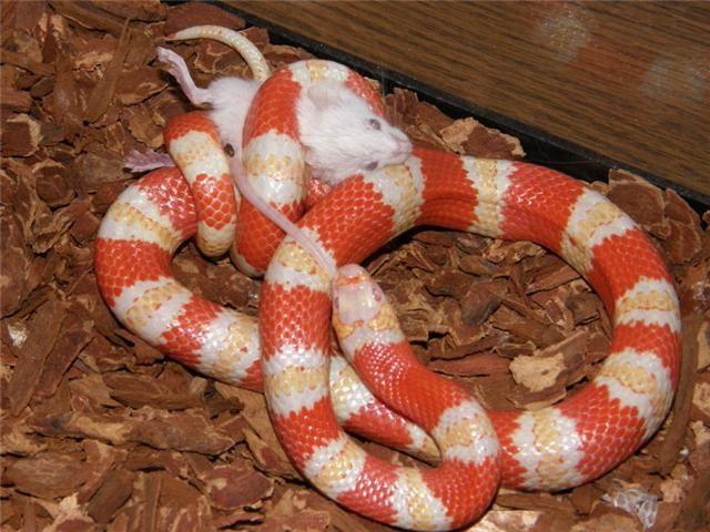 relationship between snake and raiden 3