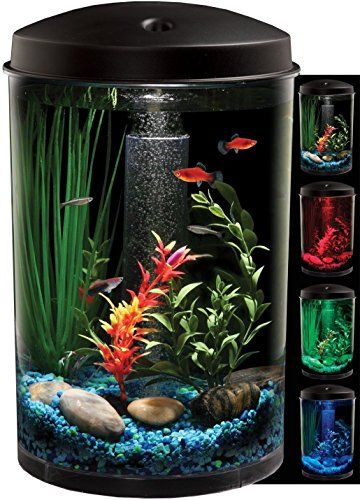 25 best ideas about round fish tank on pinterest glass for 3 gallon fish bowl