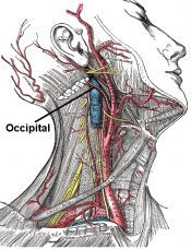 I suffer with a neurological condition alongside my fibromyalgia known as Occipital neuralgia which is is a neurological condition in which the occipital nerves – the nerves that run from the…