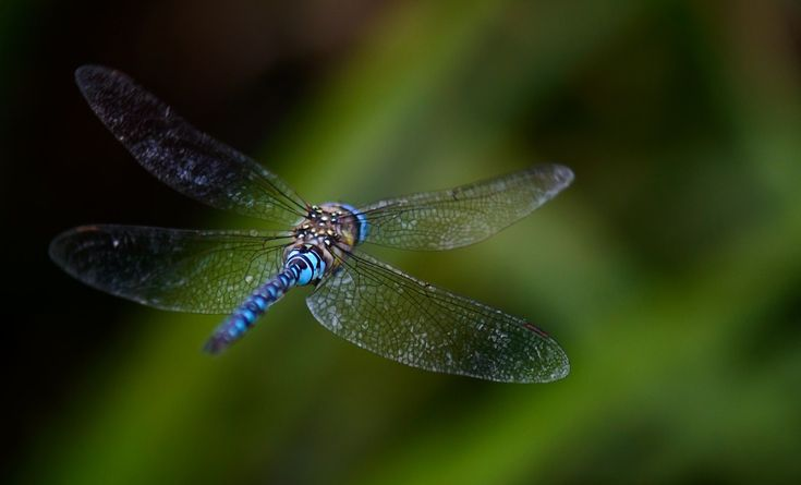 Dragonfly, Fly, Background, Blurred, Blue, Wings