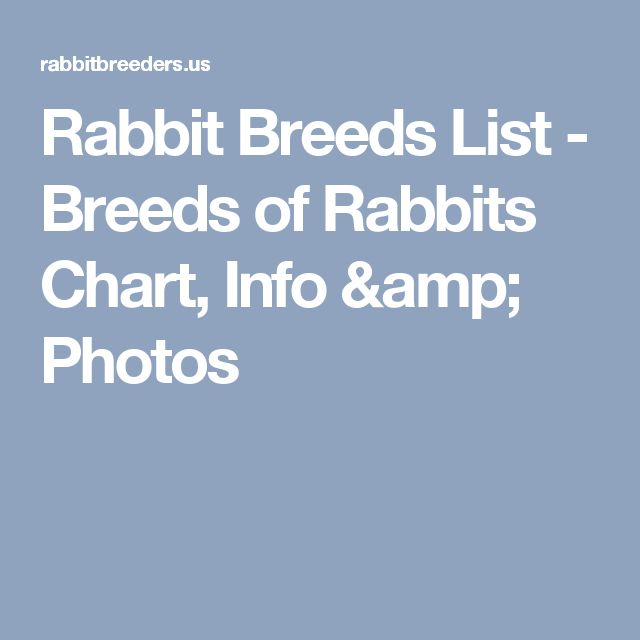 Rabbit Breeds List - Breeds of Rabbits Chart, Info & Photos