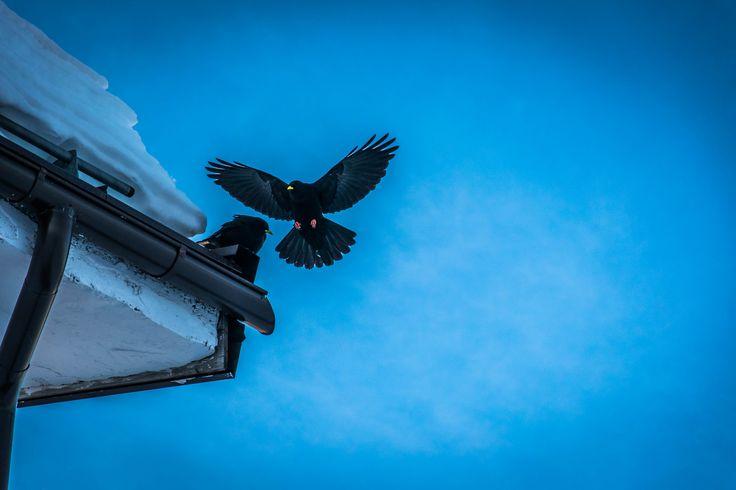 #Frozen fly !