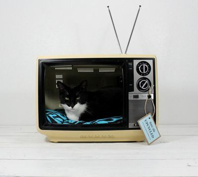 Cute upcycled pet beds!Upcycling Vintage, Cat Beds, Ideas, Atoms Attic, Pets Beds, Pet Beds, Upcycling Pets, Tv Pets, Diy Pets