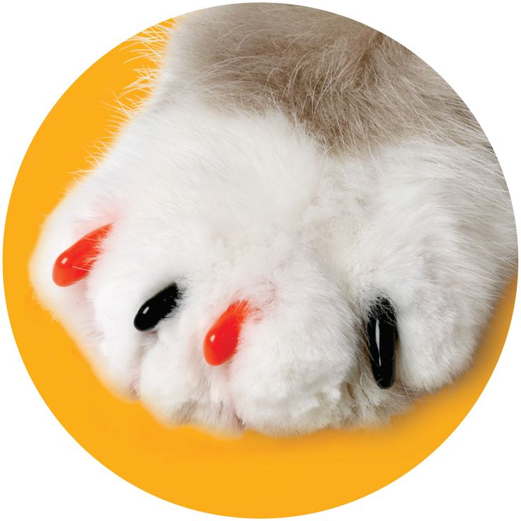 soft claws nail caps are a simple solution when pet