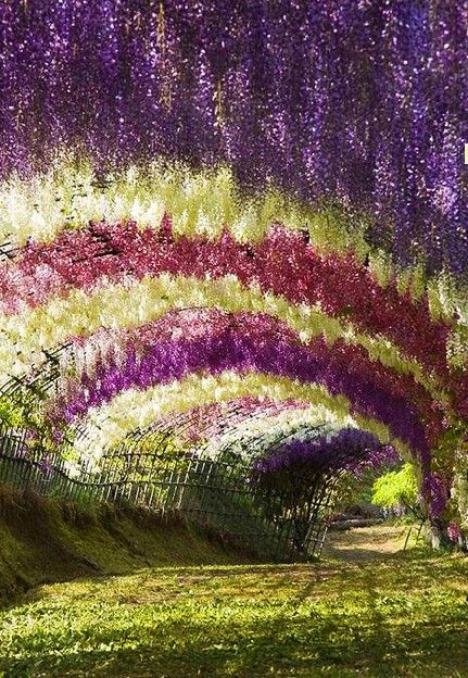 1000 images about japan i love on pinterest kimonos Wisteria flower tunnel path in japan