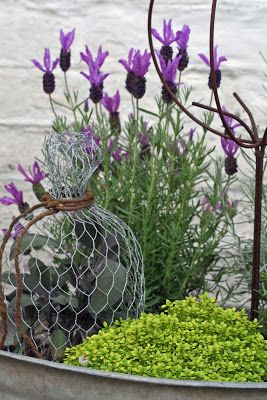 find this pin and more on french lavender - French Lavender