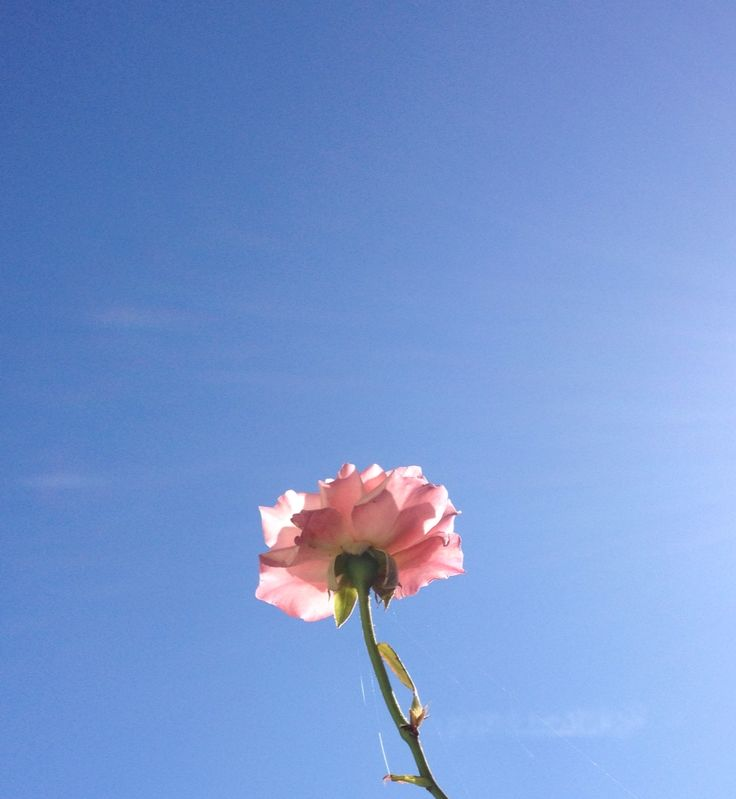 Flower and Sky!