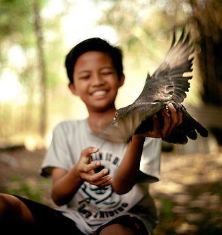 Bermain burung dara. potrait foto anak bermain