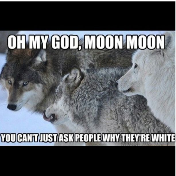 lol...Moon Moon is an awkward one! The moon moon saga meets mean girls