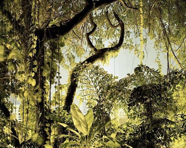 Peter Bialobrzeski, Paradise Now # 38, 2008