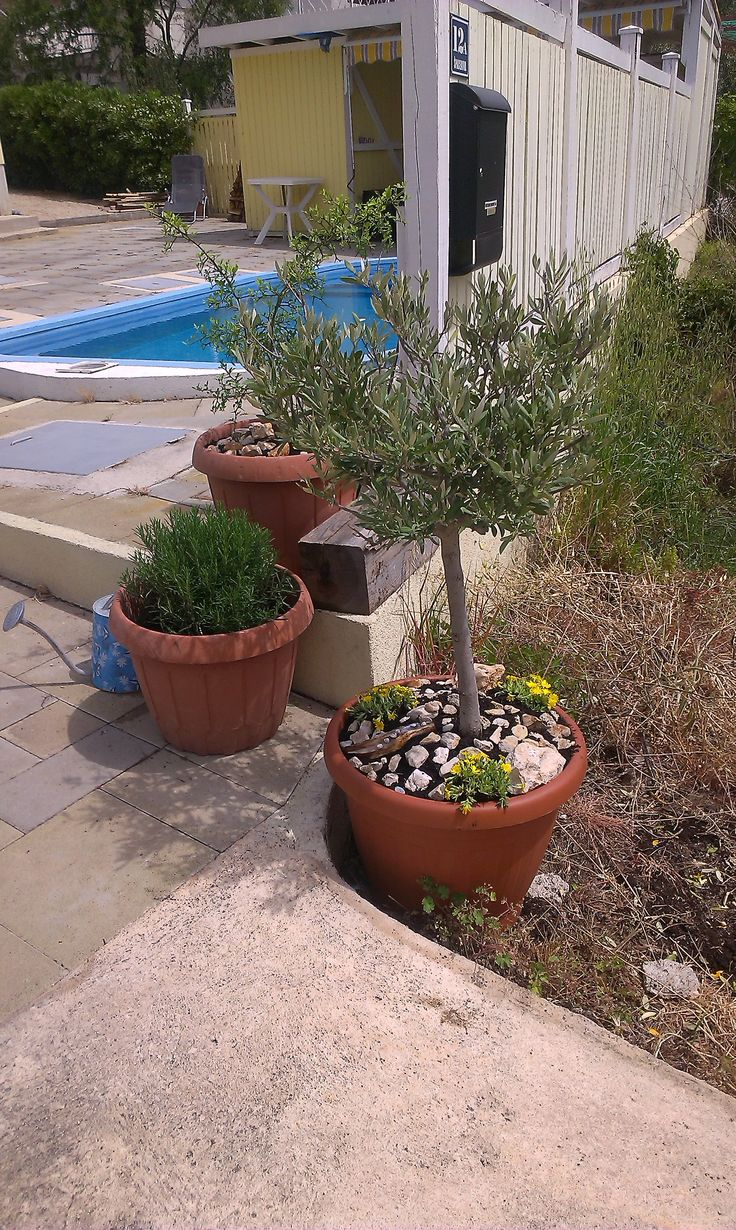 "The ""whole garden"" at Villa Solsikke"
