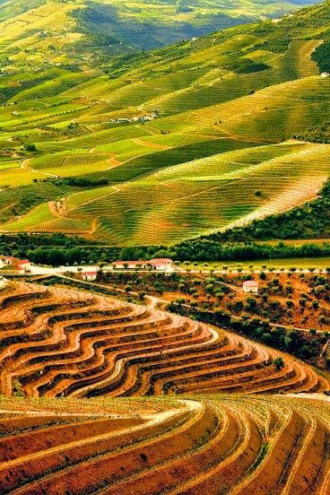 Douro vineyards, Portugal